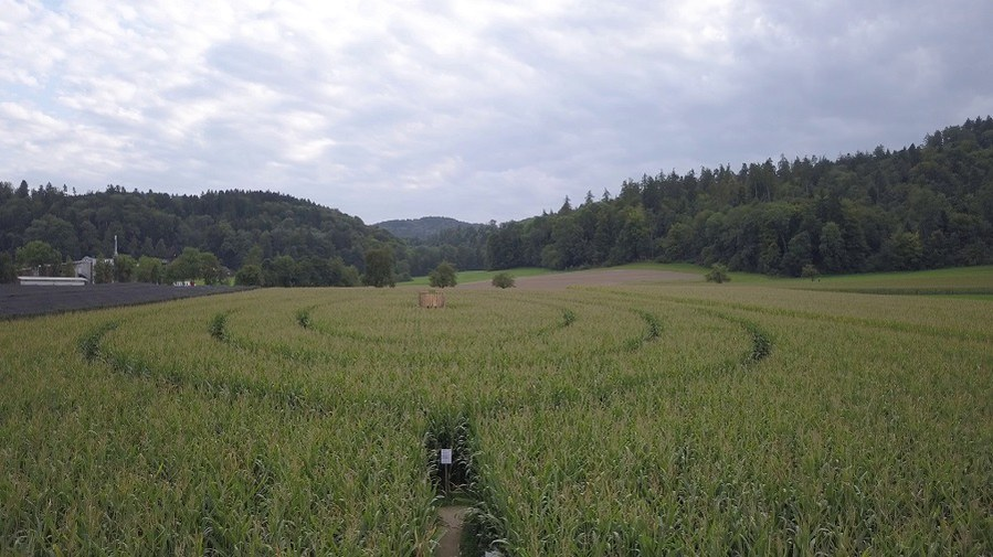 Das Labyrinth wächst heran_FOTO_Pfarrei St. Georg Elgg