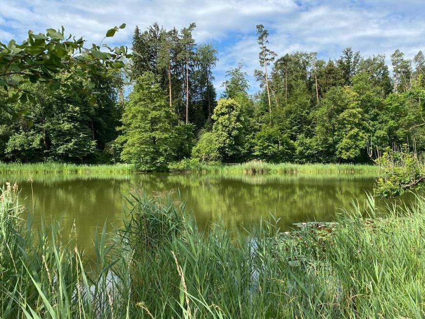 Biotop mit Vielfalt an Lebensformen