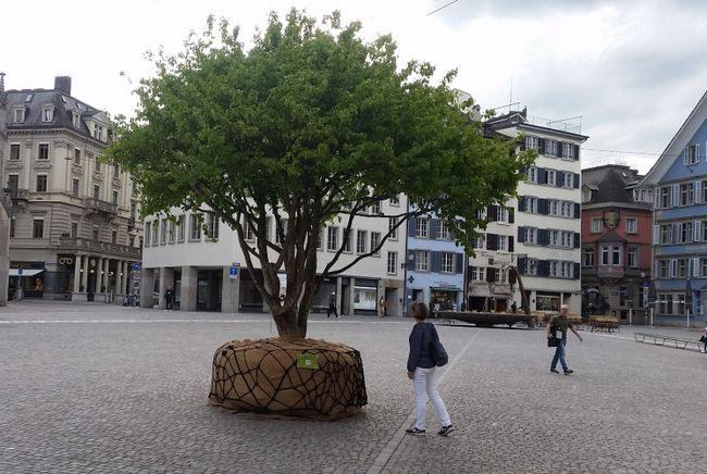 mai7Hoffnungsbaum.jpg